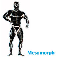mesomorph male body shape